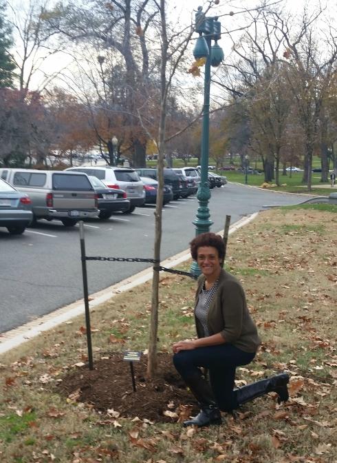 Emmett Till Memorial Tree - FMA Knee